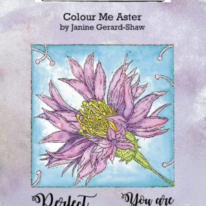 IndigoBlu Colour Me Aster IND0746