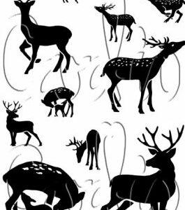 Card-io Clear Stempels Dear Deer